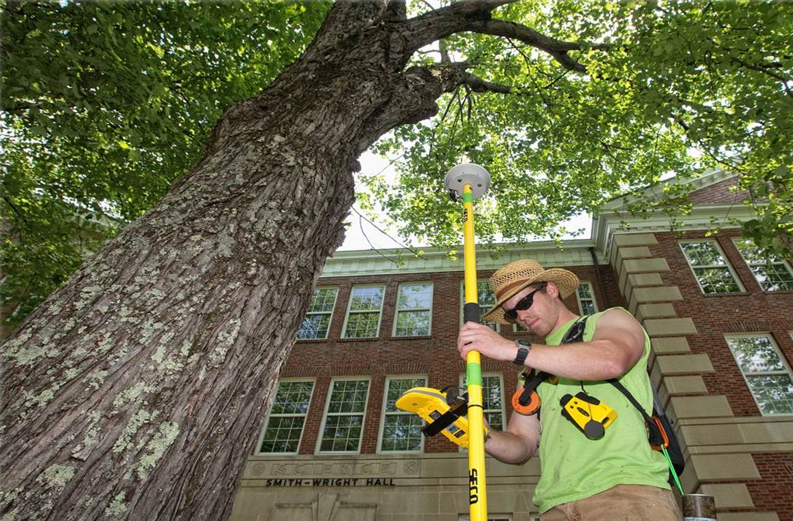 Arborist Consultations-San Marcos CA Tree Trimming and Stump Grinding Services-We Offer Tree Trimming Services, Tree Removal, Tree Pruning, Tree Cutting, Residential and Commercial Tree Trimming Services, Storm Damage, Emergency Tree Removal, Land Clearing, Tree Companies, Tree Care Service, Stump Grinding, and we're the Best Tree Trimming Company Near You Guaranteed!