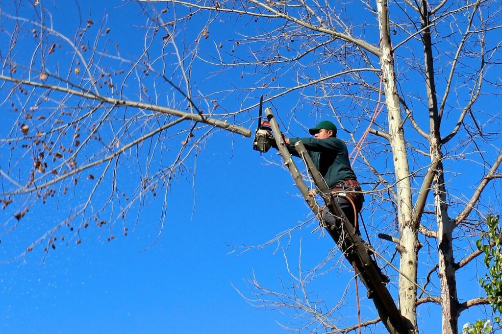 Contact Us-San Marcos CA Tree Trimming and Stump Grinding Services-We Offer Tree Trimming Services, Tree Removal, Tree Pruning, Tree Cutting, Residential and Commercial Tree Trimming Services, Storm Damage, Emergency Tree Removal, Land Clearing, Tree Companies, Tree Care Service, Stump Grinding, and we're the Best Tree Trimming Company Near You Guaranteed!