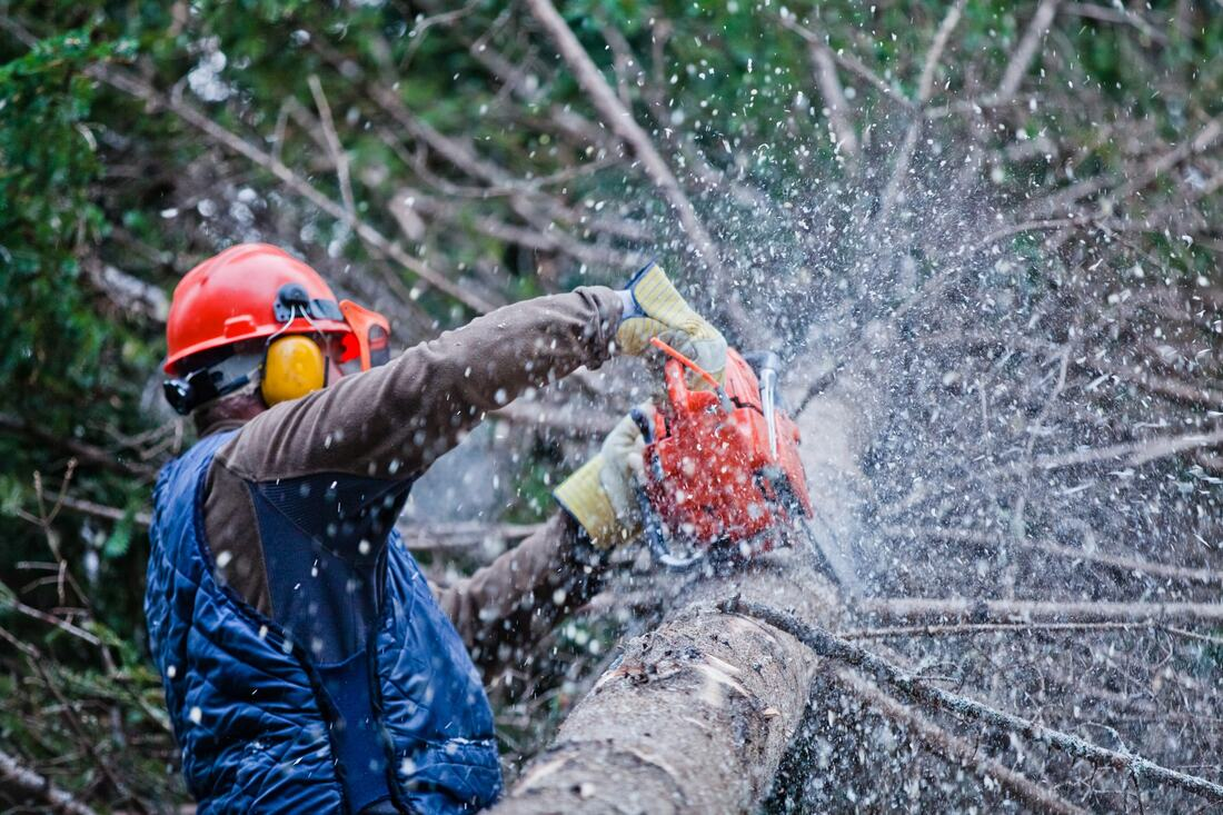 Del Dios-San Marcos CA Tree Trimming and Stump Grinding Services-We Offer Tree Trimming Services, Tree Removal, Tree Pruning, Tree Cutting, Residential and Commercial Tree Trimming Services, Storm Damage, Emergency Tree Removal, Land Clearing, Tree Companies, Tree Care Service, Stump Grinding, and we're the Best Tree Trimming Company Near You Guaranteed!