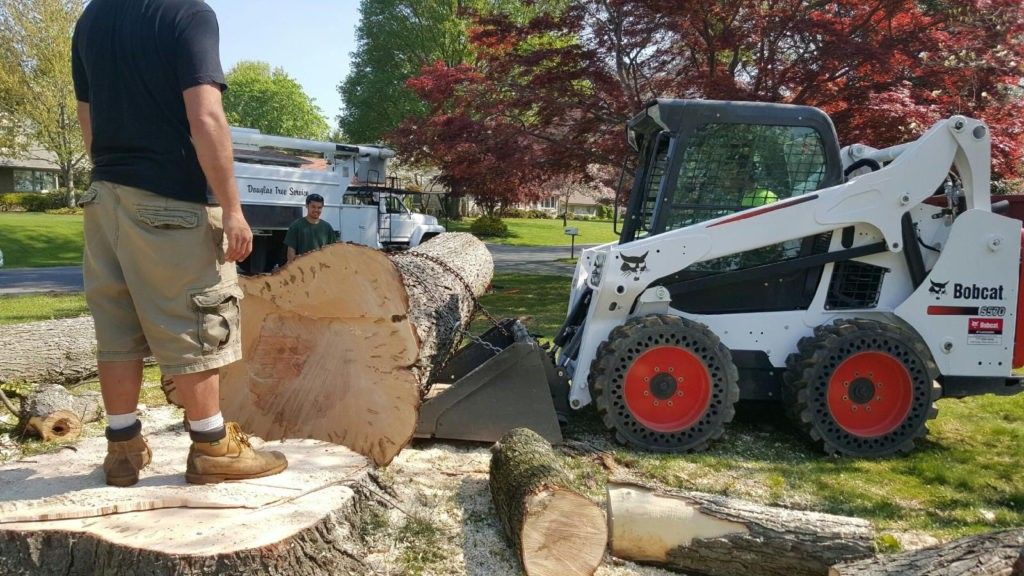 Escondido-San Marcos CA Tree Trimming and Stump Grinding Services-We Offer Tree Trimming Services, Tree Removal, Tree Pruning, Tree Cutting, Residential and Commercial Tree Trimming Services, Storm Damage, Emergency Tree Removal, Land Clearing, Tree Companies, Tree Care Service, Stump Grinding, and we're the Best Tree Trimming Company Near You Guaranteed!