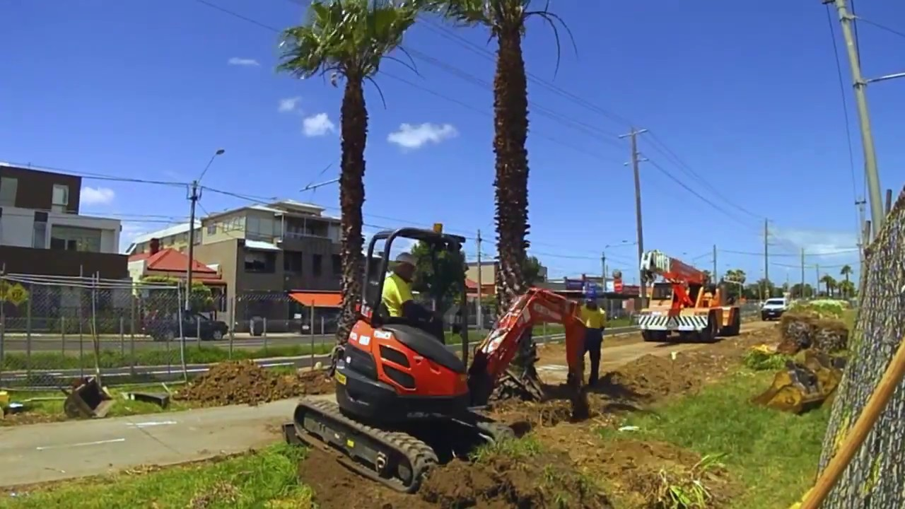 Palm Tree Removal-San Marcos CA Tree Trimming and Stump Grinding Services-We Offer Tree Trimming Services, Tree Removal, Tree Pruning, Tree Cutting, Residential and Commercial Tree Trimming Services, Storm Damage, Emergency Tree Removal, Land Clearing, Tree Companies, Tree Care Service, Stump Grinding, and we're the Best Tree Trimming Company Near You Guaranteed!