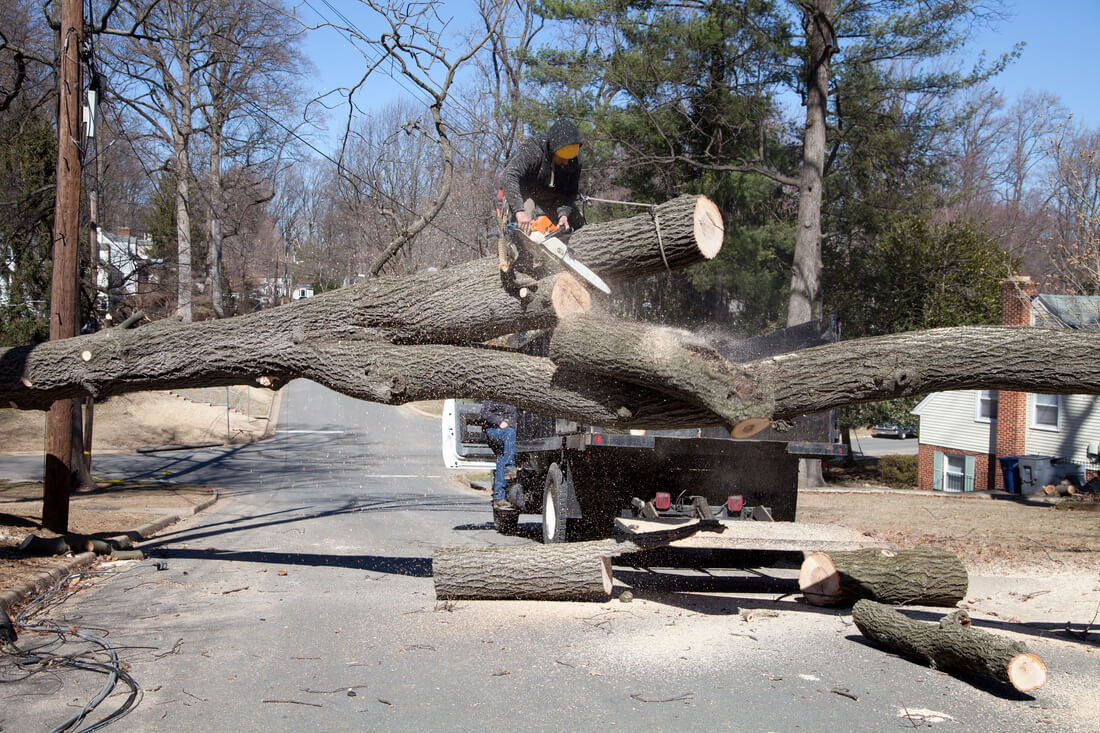 Residential Tree Services-San Marcos CA Tree Trimming and Stump Grinding Services-We Offer Tree Trimming Services, Tree Removal, Tree Pruning, Tree Cutting, Residential and Commercial Tree Trimming Services, Storm Damage, Emergency Tree Removal, Land Clearing, Tree Companies, Tree Care Service, Stump Grinding, and we're the Best Tree Trimming Company Near You Guaranteed!