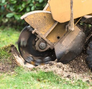 Stump Grinding-San Marcos CA Tree Trimming and Stump Grinding Services-We Offer Tree Trimming Services, Tree Removal, Tree Pruning, Tree Cutting, Residential and Commercial Tree Trimming Services, Storm Damage, Emergency Tree Removal, Land Clearing, Tree Companies, Tree Care Service, Stump Grinding, and we're the Best Tree Trimming Company Near You Guaranteed!