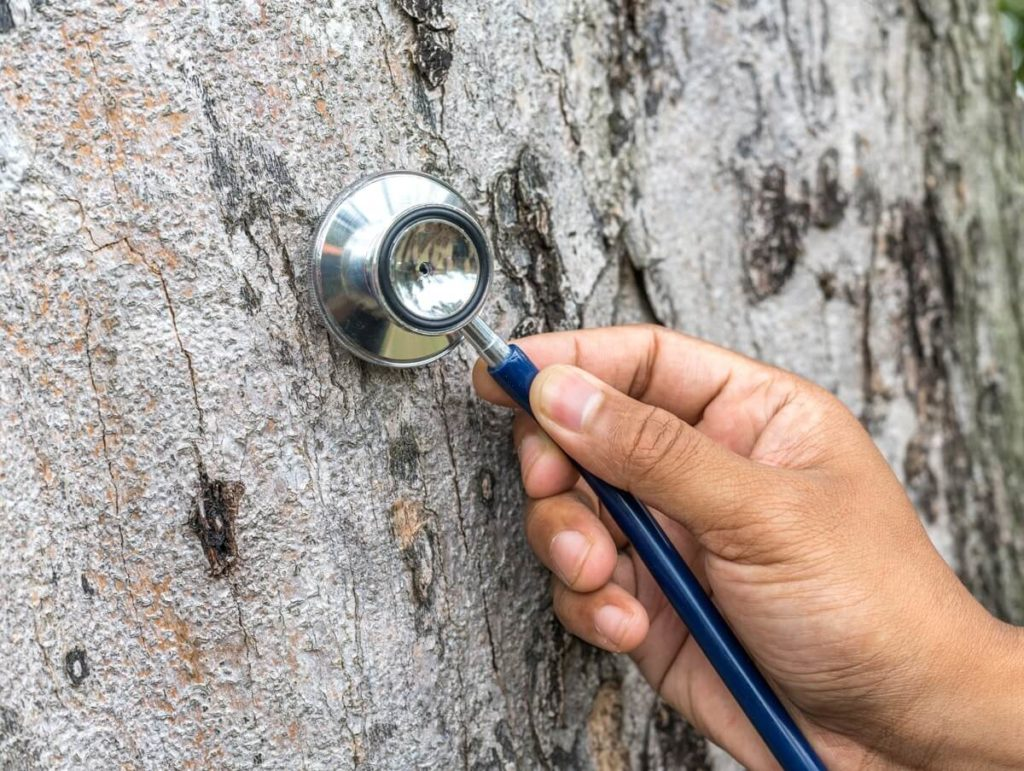 Tree Assessments-San Marcos CA Tree Trimming and Stump Grinding Services-Tree Assessments-San Marcos CA Tree Trimming and Stump Grinding Services-We Offer Tree Trimming Services, Tree Removal, Tree Pruning, Tree Cutting, Residential and Commercial Tree Trimming Services, Storm Damage, Emergency Tree Removal, Land Clearing, Tree Companies, Tree Care Service, Stump Grinding, and we're the Best Tree Trimming Company Near You Guaranteed!