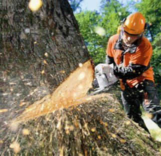 Tree Cutting-San Marcos CA Tree Trimming and Stump Grinding Services-We Offer Tree Trimming Services, Tree Removal, Tree Pruning, Tree Cutting, Residential and Commercial Tree Trimming Services, Storm Damage, Emergency Tree Removal, Land Clearing, Tree Companies, Tree Care Service, Stump Grinding, and we're the Best Tree Trimming Company Near You Guaranteed!