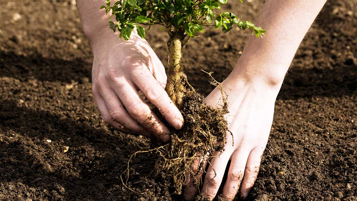 Tree Planting-San Marcos CA Tree Trimming and Stump Grinding Services-We Offer Tree Trimming Services, Tree Removal, Tree Pruning, Tree Cutting, Residential and Commercial Tree Trimming Services, Storm Damage, Emergency Tree Removal, Land Clearing, Tree Companies, Tree Care Service, Stump Grinding, and we're the Best Tree Trimming Company Near You Guaranteed!