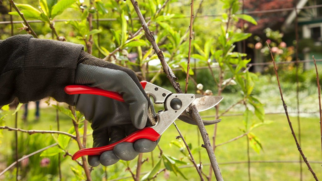 Tree Pruning-San Marcos CA Tree Trimming and Stump Grinding Services-We Offer Tree Trimming Services, Tree Removal, Tree Pruning, Tree Cutting, Residential and Commercial Tree Trimming Services, Storm Damage, Emergency Tree Removal, Land Clearing, Tree Companies, Tree Care Service, Stump Grinding, and we're the Best Tree Trimming Company Near You Guaranteed!
