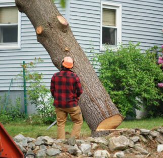 Tree Removal-San Marcos CA Tree Trimming and Stump Grinding Services-We Offer Tree Trimming Services, Tree Removal, Tree Pruning, Tree Cutting, Residential and Commercial Tree Trimming Services, Storm Damage, Emergency Tree Removal, Land Clearing, Tree Companies, Tree Care Service, Stump Grinding, and we're the Best Tree Trimming Company Near You Guaranteed!