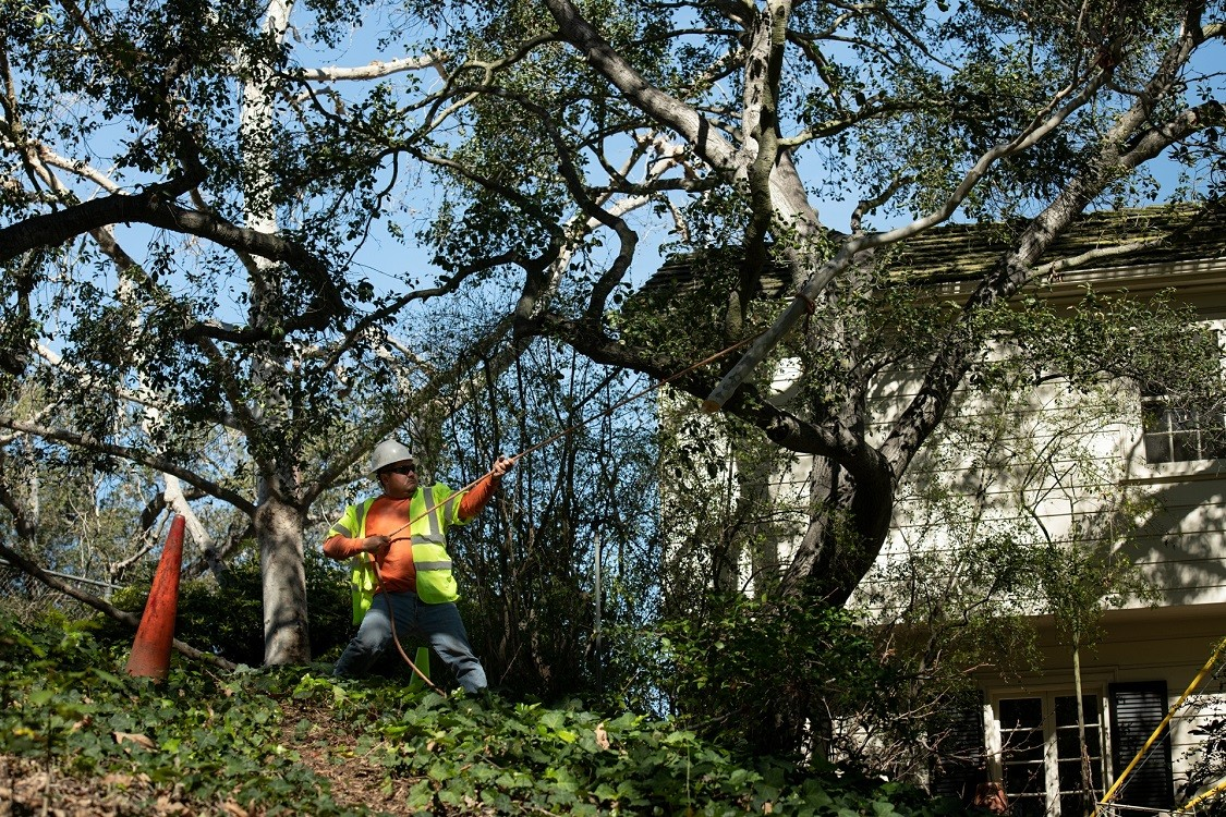 Vista-San Marcos CA Tree Trimming and Stump Grinding Services-We Offer Tree Trimming Services, Tree Removal, Tree Pruning, Tree Cutting, Residential and Commercial Tree Trimming Services, Storm Damage, Emergency Tree Removal, Land Clearing, Tree Companies, Tree Care Service, Stump Grinding, and we're the Best Tree Trimming Company Near You Guaranteed!